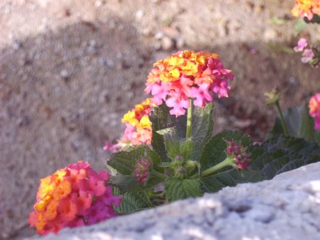 Akasee.ir    Photo By : Parastoo